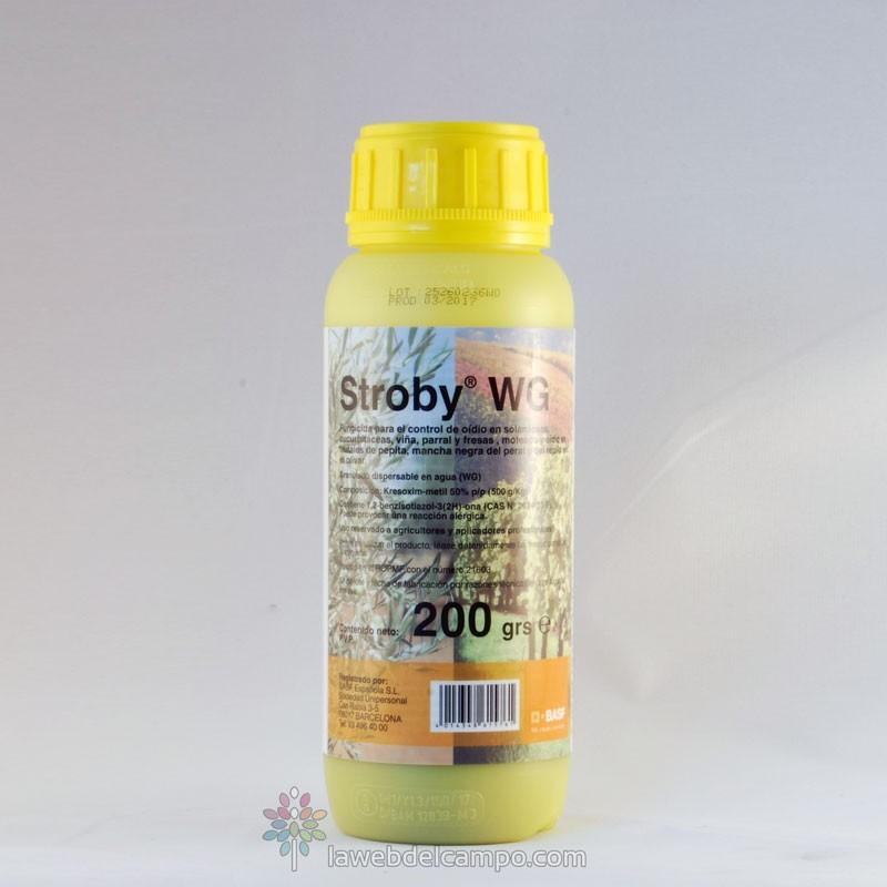 Identificación insecto Stroby-wg